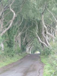 Está localizado em Ballymoney na Irlanda do Norte. É uma rua cercada por dezenas de árvores de diversos formatos que foram uma vista impressionante. As árvores foram plantadas pela família Stuart no século 18 e já foi cenário de vários filmes e séries.