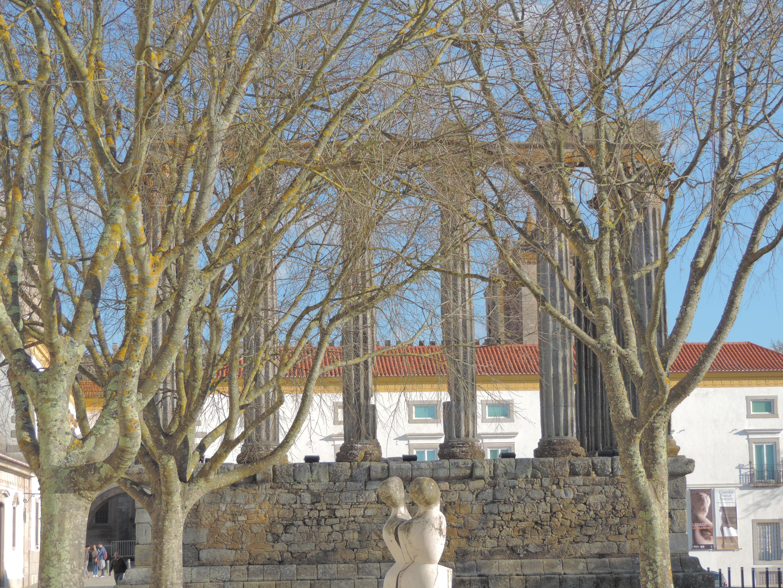 templo arvore